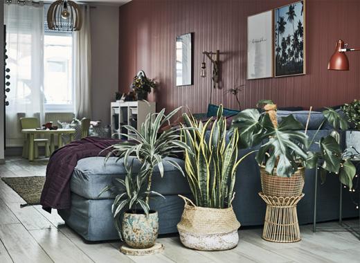 Дневна със сив диван, растения в саксии и червена стена.